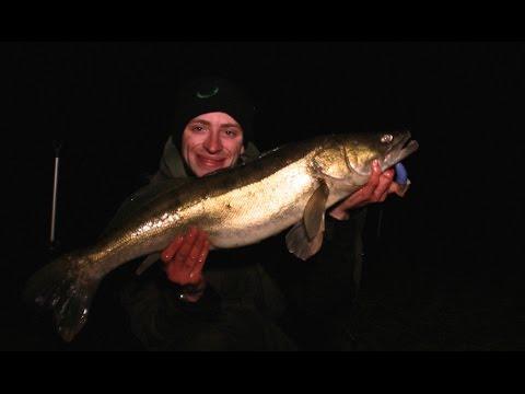 Der fiskes efter sandart og gedder i en engelsk å