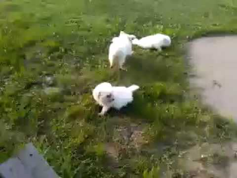 Its Puppy playtime outside