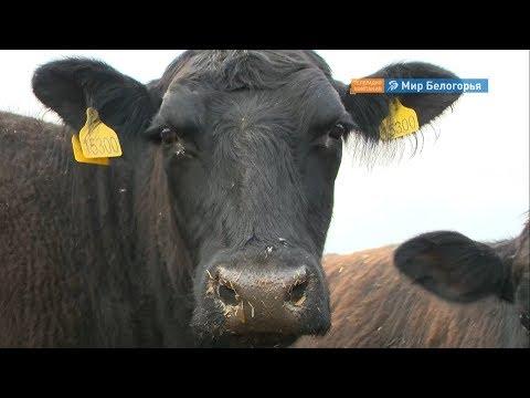 , title : 'Как открыть свою ферму
