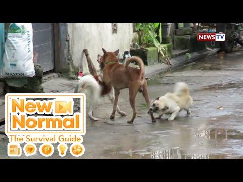 [GMA]  Bright Side: Dog adoption, magagawa na sa pamamagitan ng mobile app | New Normal