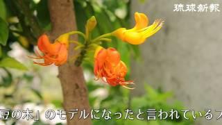 「ジャックと豆の木」が開花新都心公園