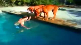 Смотреть онлайн Пес переживает за хозяина в бассейне