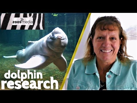 "Important RESEARCH with Amazon river dolphin ""BABY"" at DUISBURG ZOO 