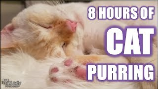 CAT PURRING for 8 HOURS 😻 (perfect ASMR for stress relief, healing & relaxation for cats & people)