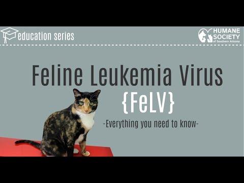 Video What is Feline Leukemia Virus?