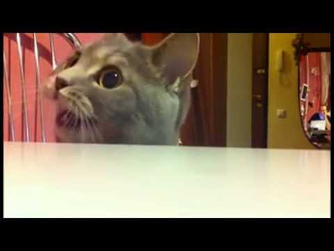 Кошачий невроз