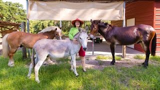 Ponies, Horses, Donkeys, & Mules: Everything you need to know.