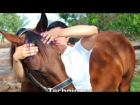 Equine Craniosacral Therapy Course Overview - YouTube