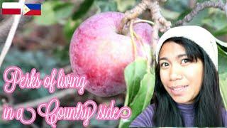 A very disappointing package+ Picking Apples 🍎| Filipina & Polish | Pinay in Poland