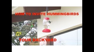 How to Invite hummingbird to your backyard