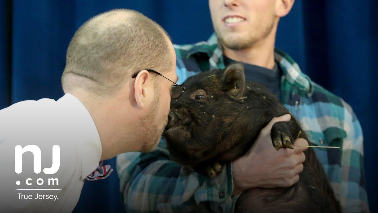 Директор школы поцеловал свинью проиграв спор ученикам