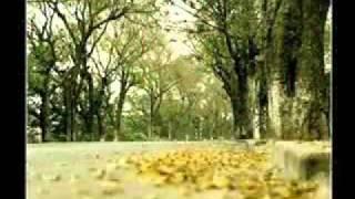 Con đường tình ta đi - Ngọc Lan