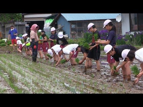 田んぼの泥はあたたかい! 田頭小学校で田植え