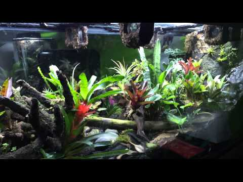 My 220 gallons vivarium (dart frogs)