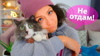 У моей кошки новые хозяева?! Киса Алиса переезжает в новый дом?! 10 фактов о моей кошке