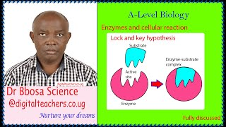 Enzymes and cellular reaction