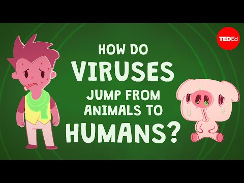 How Can Viruses Be Contagious Across Species?