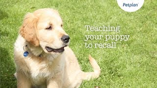 Dog Recall Training | Puppy Training Tips | Petplan