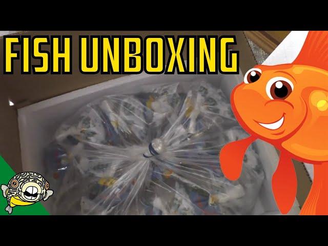 Aquarium Fish Unboxing! Bettas, Plecos, Corydoras! Daily Dose #22