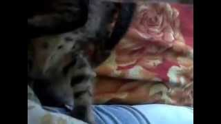 Котик-Антошка