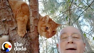 Retired Guy Rescues Over 700 Cats From Trees | The Dodo Heroes