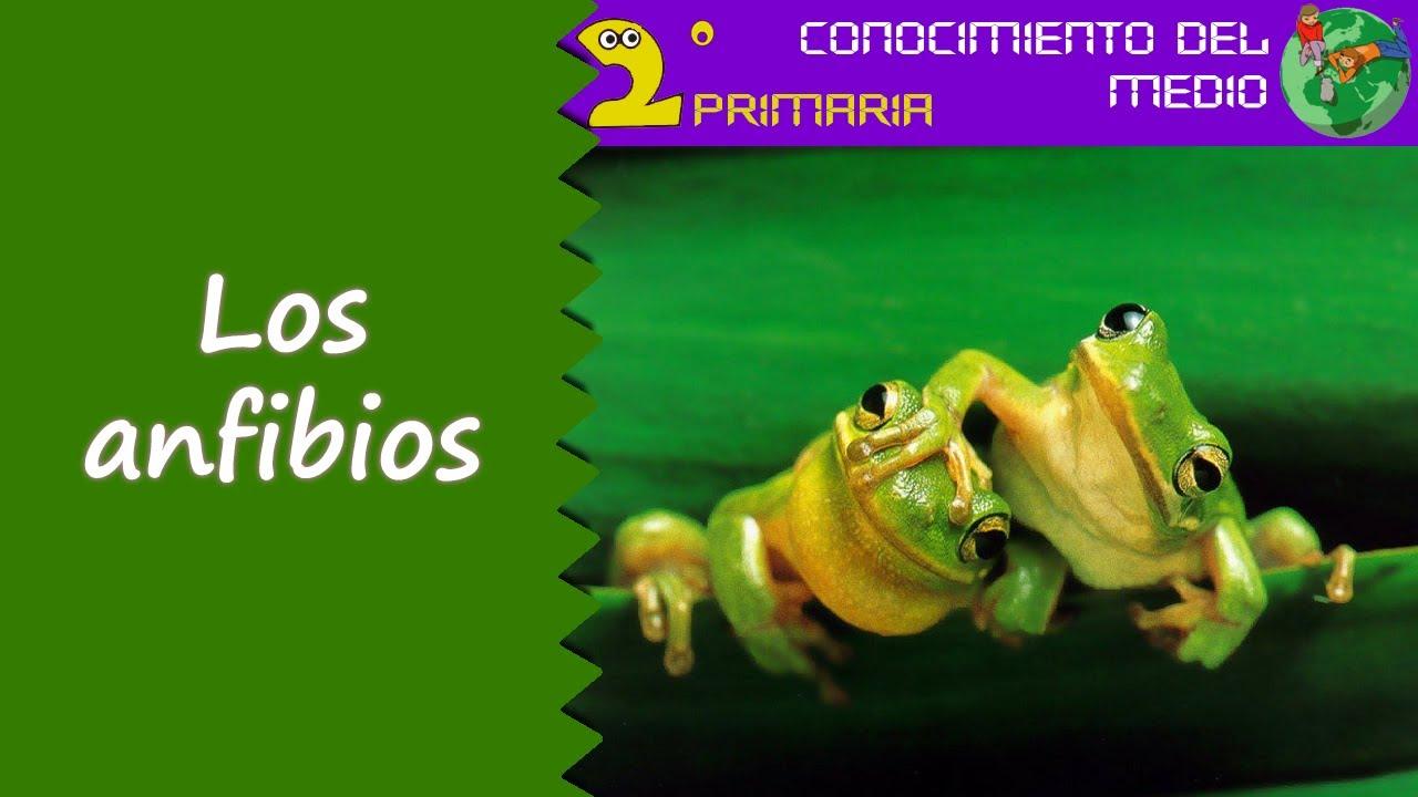 Cono, 2º Primaria. Tema 5. Los anfibios