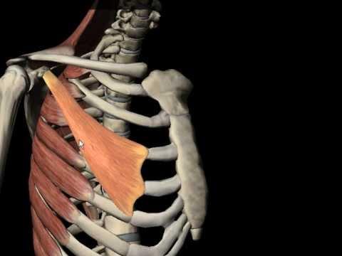 Inflamația articulației sternului