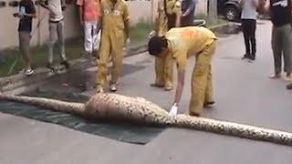 Спас кота от змеи. Сняли на видео. Подборка видео