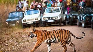 Endangered Species: The Bengal Tiger