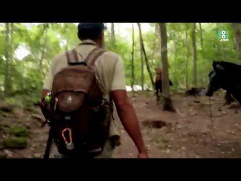 El Mirador, la caminata hacia la pirámide más alta del mundo maya