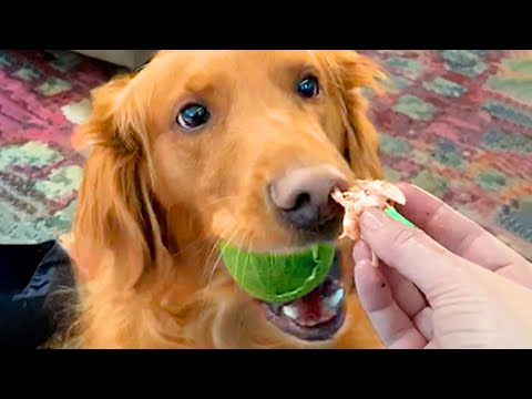 Cute Dogs That Will Make Your Day   Funny Pet Videos