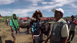 preview picture of video 'Indonesia - Southern Sulawesi - Tana Toraja'