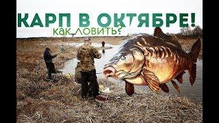 Как ловить сазана в октябре на пруду