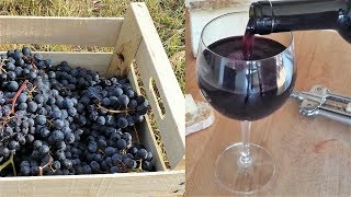 Homemade Italian Wine - How To Make Wine At Home From Grapes Without Yeast And Sugar