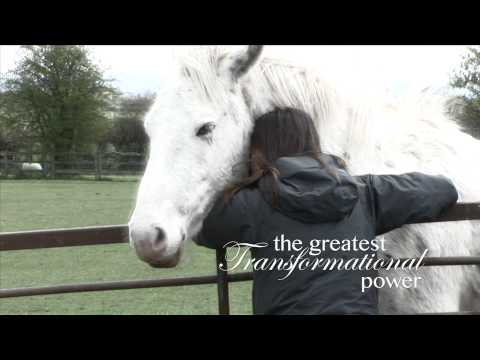 Leading Equine Assisted Psychotherapy (LEAP)