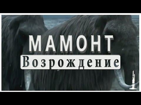 Возрождение мамонта. Клонирование мамонта. Revival of the mammoth. Cloning of the mammoth