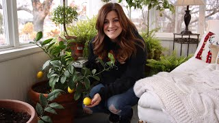 Citrus Growing Update & Care Tips! 🍋💚// Garden Answer