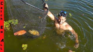 SWIMMING to CATCH AQUARIUM FISH! **Exotic Fish in South Florida**