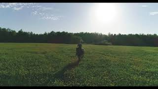Horse riding at sunset | Estonia | Drone DJI Phantom 4 Pro 4K