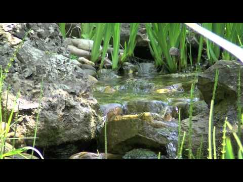 Meditation Music With Nature Sounds, Shakuhachi-Brook by Akitan