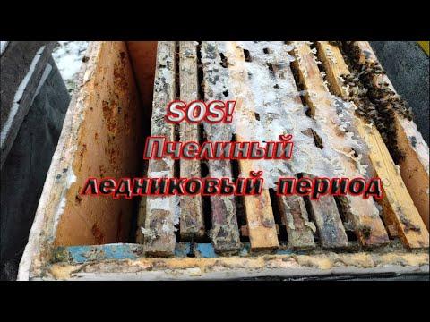 Пчеловодство. Экстренная замена холстиков во время зимовки. Спасаю пчёл от ледникового периода.