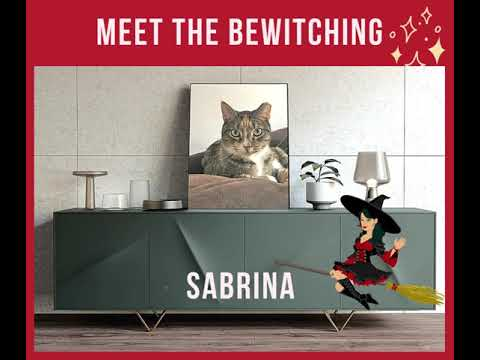 Sabrina, an adopted Torbie & Domestic Short Hair Mix in Kew Gardens, NY_image-1