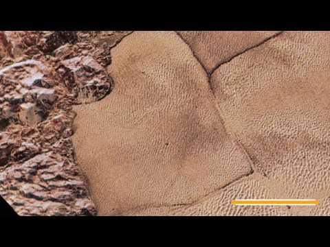 Video visar hur det skulle vara att landa på Pluto
