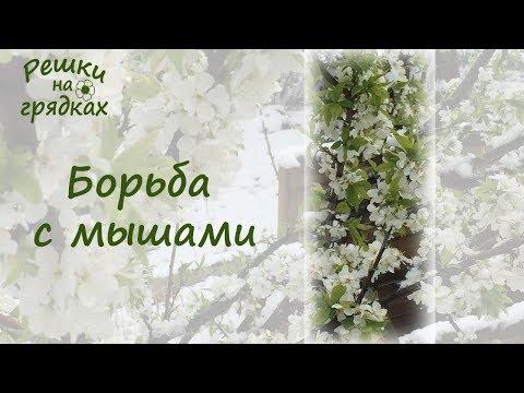 Молитвы за родителей славянские