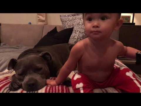 Chumpa Lumpa, an adoptable Pit Bull Terrier Mix in Beverly Hills, CA
