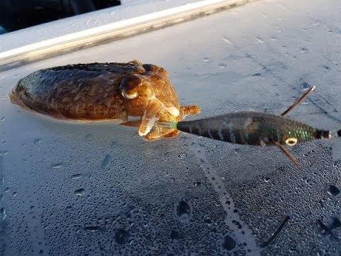 Die Würmer im Meerfisch gefährlich für den Menschen