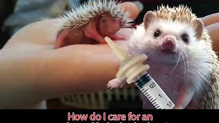 How do I care for an orphaned baby hedgehog? -Ask Quilly