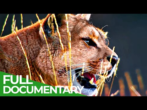Wild Journey - Chile: Country of Contrasts | Free Documentary Nature