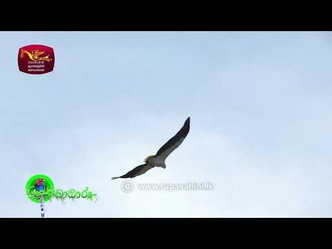 Sobadhara - සොබාධාරා | Season 2 | Episode - 19 | 2018-05-25 | Rupavahini Documentary