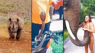 animales Los animales luchando contra